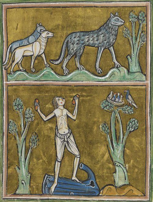 London, British Library, Royal MS 12 F. XIII, Rochester Bestiary (1230 c.), f. 29r. Un branco di lupi assiste alla trasformazione di un uomo in licantropo.